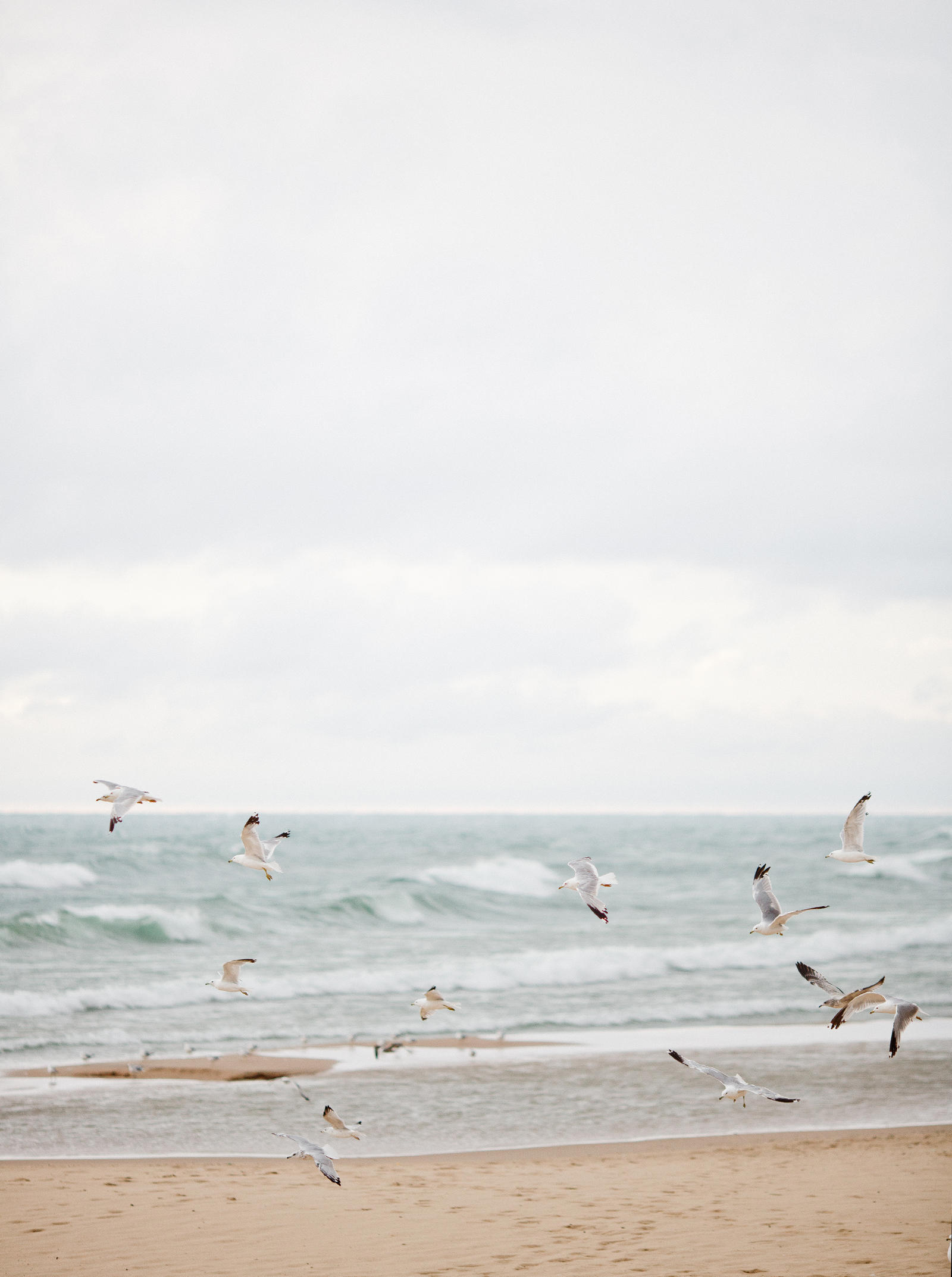 A flock of seagulls fly over the beach.