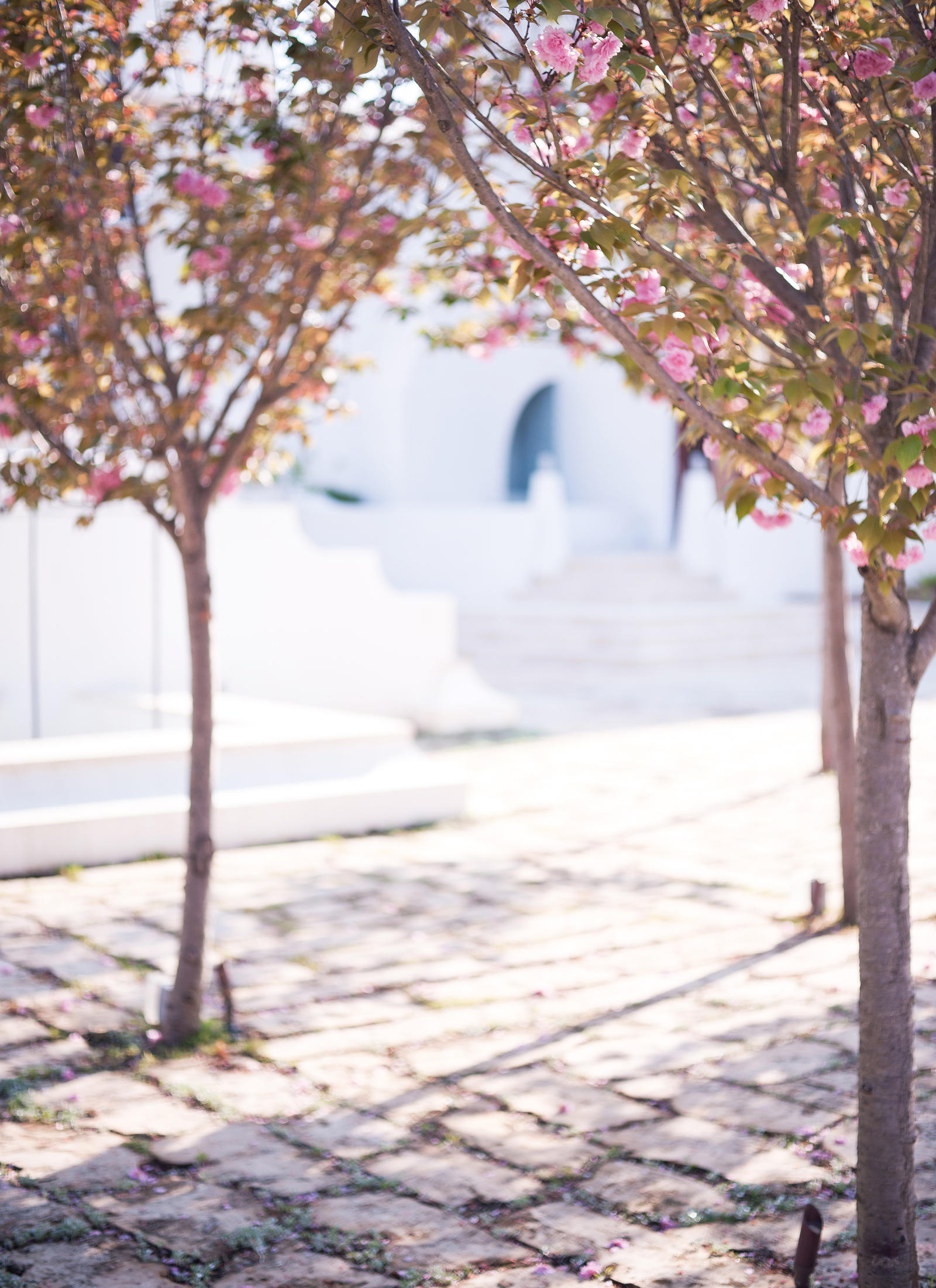 Lifestyle Photography | Atlanta, GA | Flowering trees on a cobblestone walkway.