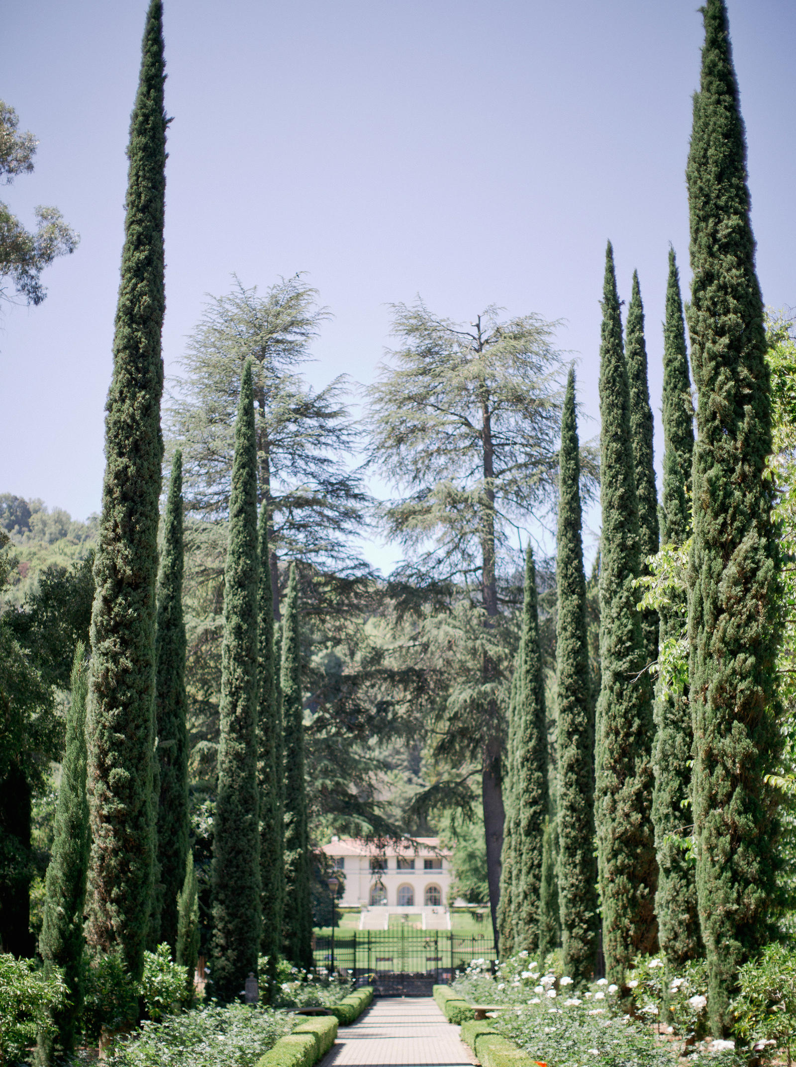 Wedding Photography | A tree lined walkway leading to Villa Montalvo Saratoga, CA